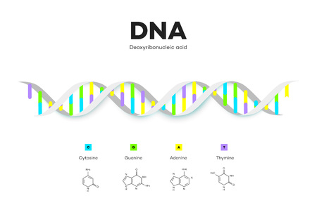 Molecular Structure Of DNA. Infographic Educational Vector Illustration Illustration