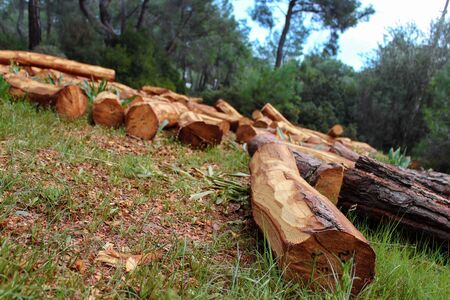 woodpile: Woodpile in forest -2- Stock Photo