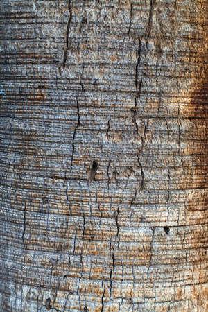 Tree Bark Stock Photo - 17861910