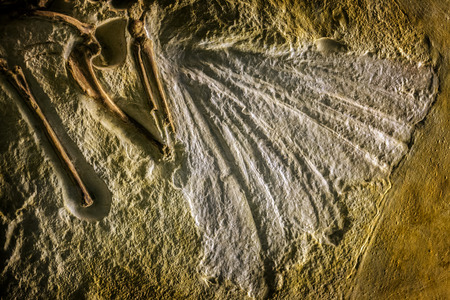 fossil record: Prehistoric Fossil Background