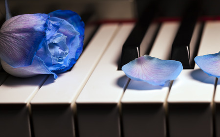 blue rose: Blue Rose on Piano Keys Stock Photo