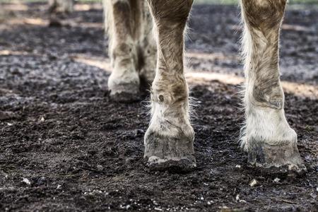 Wet Pferdefüße In Den Funken Des Wassers Auf Einem Natürlichen ...