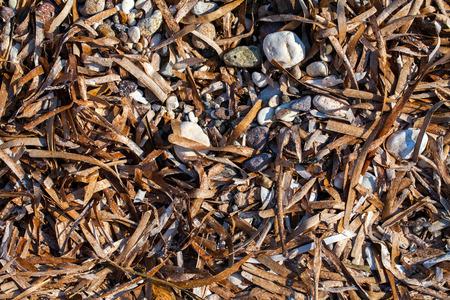 Dry Sea Moss photo