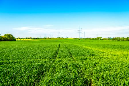 feld: Green Field