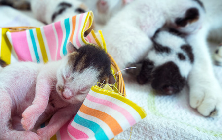 animal pussy: 3 Days old Kitty in a Basket