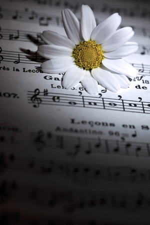 White Daisy Flower on Music Notes Stock Photo