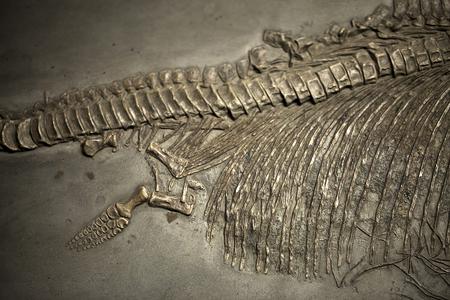Prehistoric Dinosaur Skeleton Fossile