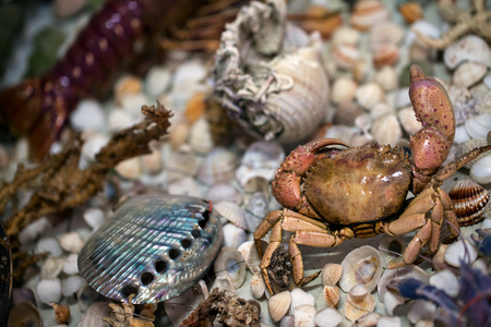 Dry Decorative Sea Shells Stock Photo