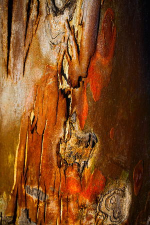 Wood Tree Bark Background Stock Photo
