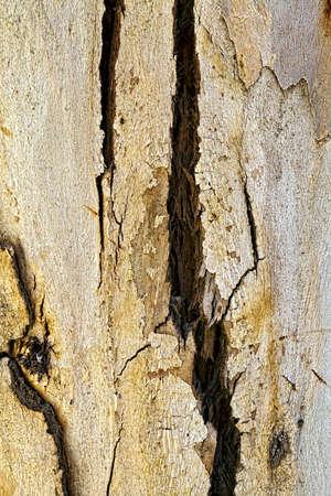 aging: Wood Tree Bark Background Stock Photo