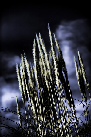 Shiny Reeds Plant View Stock Photo