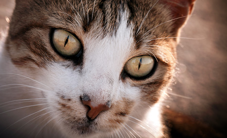 Pet Animal Cat Stock Photo