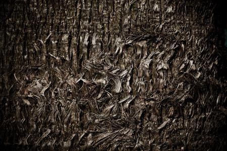 Palm Tree Bark Body Stock Photo