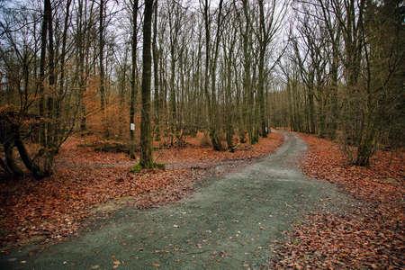 Forest in Autumn Season Photo