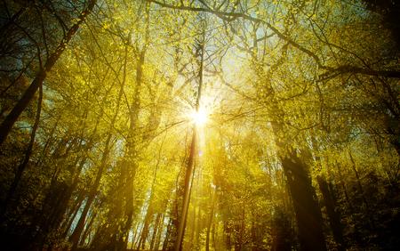 Bautiful Forest in Autumn Season and Sunlight Photo