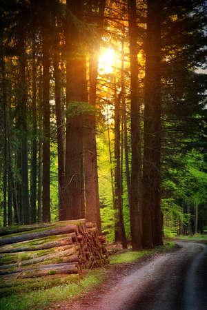 Forest in Autumn Season and Sunlight Photo