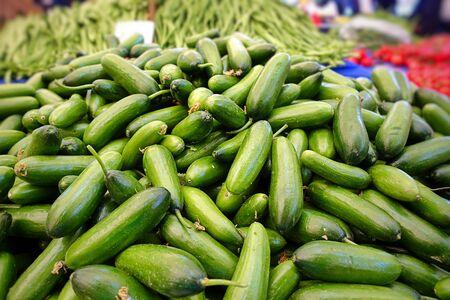 Organic Healthy Vegetable Green Cucumber in Bazaar