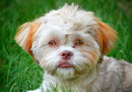 Sweet Cute Pet Animal Dog on Green Grass