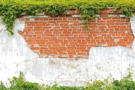 climbing leaves on white wall background, brick wall, nature frame