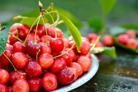 Fresh organic cherries in metal can on wooden table background with sun lights