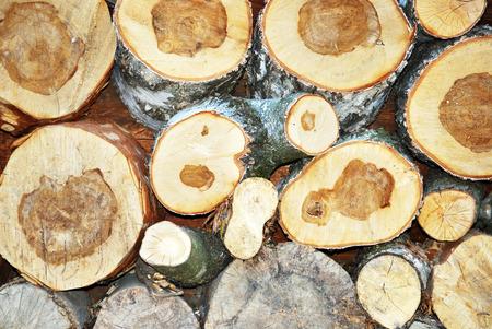 felled trees  texture photo