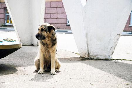 great and sad homeless dog