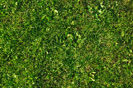 blades of grass: lawn Stock Photo