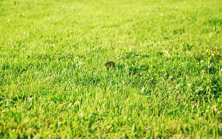 green lawn photo