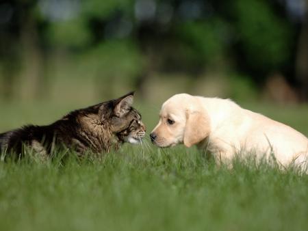 puppy and kitten: kitten and puppy friendship