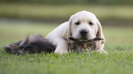 kotów: kotek i szczeniak przyjaźń Zdjęcie Seryjne