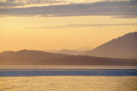Layered yellow islands with lone bird flying, Sidney Spit, British Columbia, Canada Banque d'images