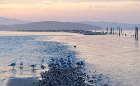 Gulls on Sidney Spit at sunset, British Columbia, Canada