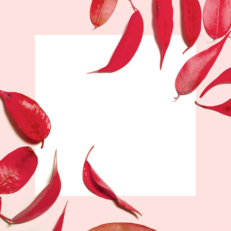 Composition pattern of red autumn leaves and white shit of paper for text on pink background. Top view banner template 写真素材