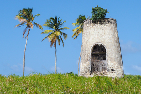 Old mill of Capesterre, Marie Galante, with surrounding palms Archivio Fotografico