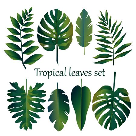 set of tropical leaves, green exotic plants on white