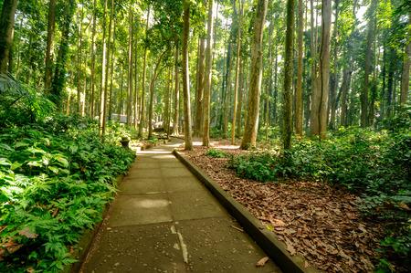 footpath inside tropical rain forest