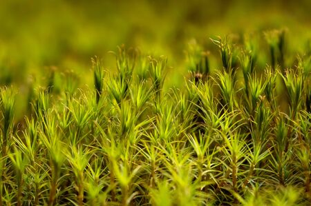 background of green plants like grass and moss
