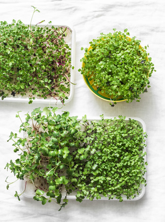 Homemade micro greens on a light background, top view. Healthy food lifestyle diet concept. Flat lay, copy space