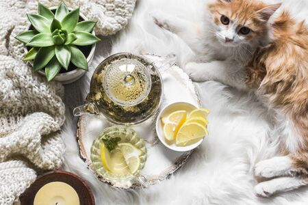 Green tea with lemon, knitted blanket, candle, red kitten on a white carpet on the floor. Ð¡oncept of  cozy home Standard-Bild - 134138998
