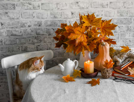 Lit candles, dry maple leaves, pumpkin, stack of books and red kitten - autumn still life interior decoration house. Cozy home concept