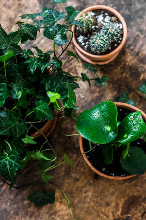 Home plants on a wooden background, top view. Interior decoration