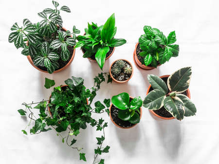 Variety of home flowers plants on a light background, top view. Floriculture, gardening, home comfort concept. Flat lay