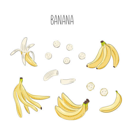 Banana set of vector drawings. Isolated hand drawn bouquet, bunch, banana peel and sliced pieces. Summer fruit art style illustration. Detailed vegetarian food. Great for label, poster, print.