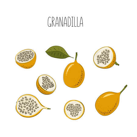 Vector set of passion fruit, passionfruit. Hand drawn stylized granadilla. Vector illustration, isolated on white background.