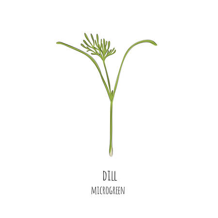 Hand drawn dill micro greens. Vector illustration in sketch style isolated on white background. Stock Illustratie