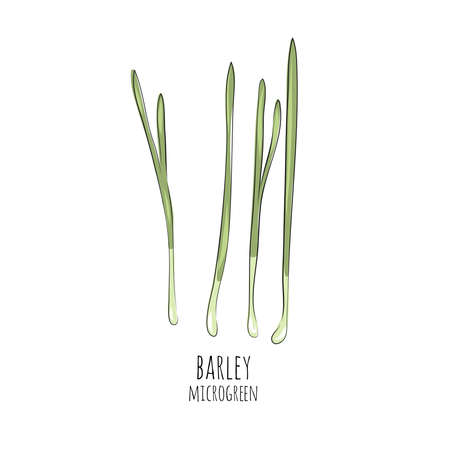 Hand drawn barley micro greens. Vector illustration in sketch style isolated on white background. Stock Illustratie