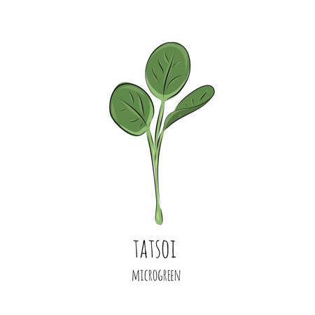 Hand drawn tatsoi micro greens. Vector illustration in sketch style isolated on white background.