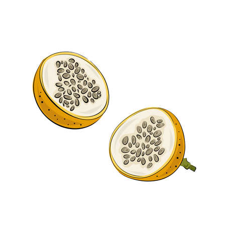 Vector set of passion fruit, passionfruit. Hand drawn stylized granadilla. Vector illustration, isolated on white background. Graphic cut pieces.Illustration for logo or icon. Illustration