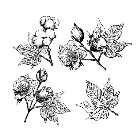 Black set of sketch cotton flower in vintage style on a white background. Vintage vector illustration. Decoration material. Decorative element. Graphic design element. Organic textiles. Vintage print.