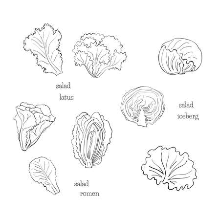 Green salad line ink black set leaves draw iceberg on white background. Design element. Vector sketch isolated illustration. Hand drawn cooking food.